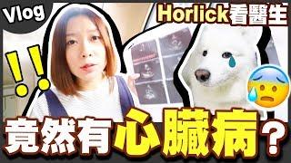 【Vlog】Horlick檢查到有先天心臟病......大陸連鎖醫院竟然咁伏?😰