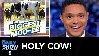 Australia's Glorious Giant Cow | The Daily Show