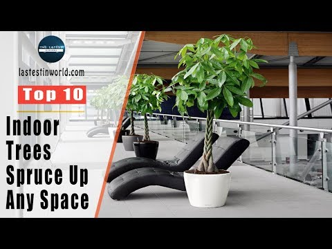 Top 10 Indoor Trees that Spruce Up Any Space