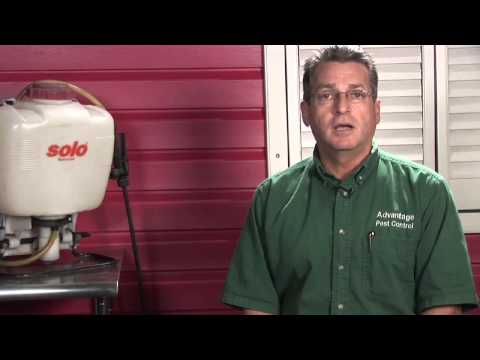 Pest Control   How to Get Rid of Wood Ants