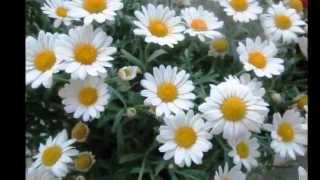 """Tchaikovsky - """"Waltz of the Flowers"""" (Nutcracker)"""