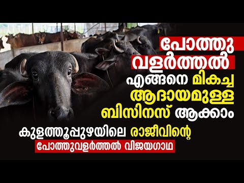 Buffalo farming in Kerala നൂറിൽ അധികം പോത്തുകളുമായി കുളത്തൂപ്പുഴയിൽ ജെല്ലിക്കെട്ട്