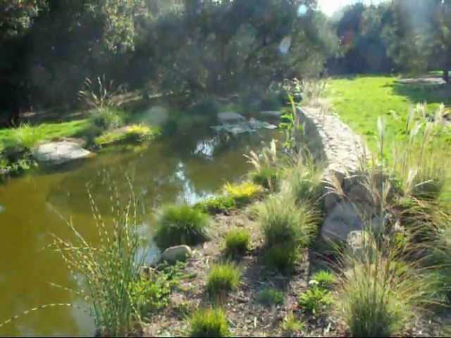 How to build a natural looking pond