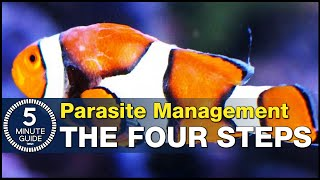 Solving fish parasites with one of two paths: Management vs. Eradication. How UV can help!
