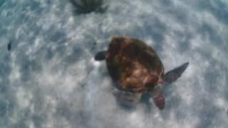 Turtle spotting Mexico 2016