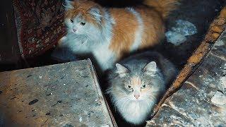 Спасение кошек погорельцев