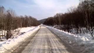 Тернейский район Приморский край. Олени на дороге. Жесть