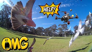 Happymodel Larva X HD - REVIEW FPV & FLIGHT..... WARNING!