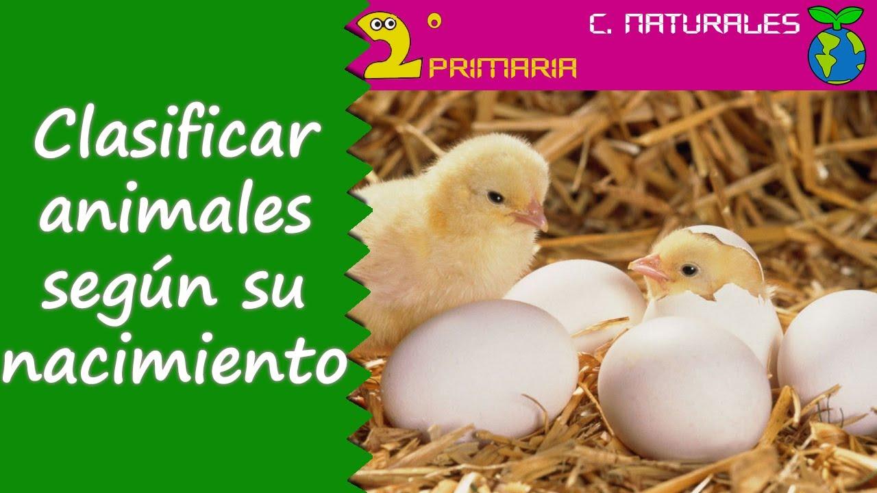 Ciencias de la Naturaleza. 2º Primaria. Tema 4. Clasificamos los animales según como nacen