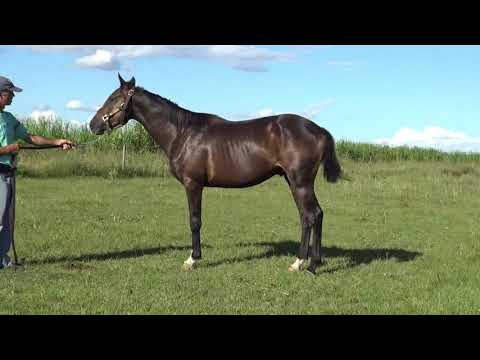 Lote CHIQUITO REYES