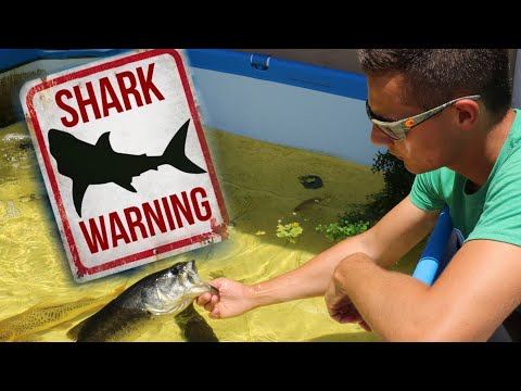 RELEASING My PET BABY JAWS In to The WILD!! **WATCH OUT**