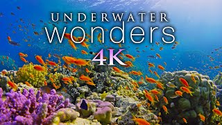 *NEW* 11 HOURS of 4K Underwater Wonders + Relaxing Music - Coral Reefs & Colorful Sea Life in UHD
