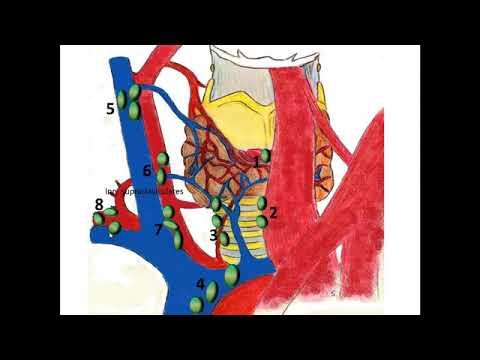 Изоэхогенный узел предстательной железы что это такое