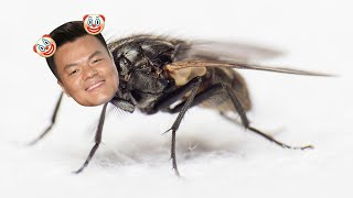 jyp being that annoying fly you can't get rid of
