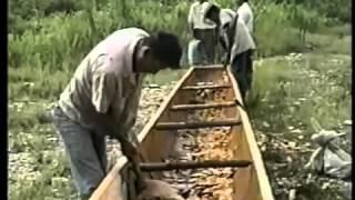 Documentales de Honduras La Selva Jawaka