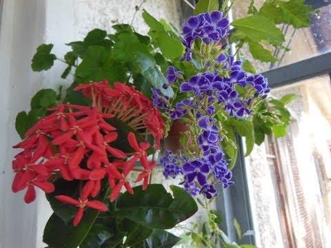 # Комнатные цветы - моя любовь, пожиратели моего свободного времени, и места на подоконниках.