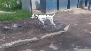 Прикол.Собака,жара.Новосибирск