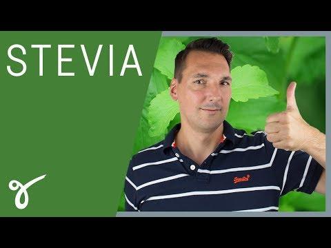 Stevia: Wie gesund ist die Zucker-Alternative?   Gerne Gesund