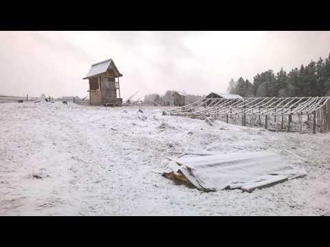 Sibirienwolf Schnee im Mai sibirische Temperaturen Russland