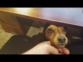 Dog Reaction to High Frequency Sounds