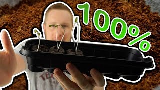 How to Germinate Cannabis Seeds ** 100% SUCCESS !! **