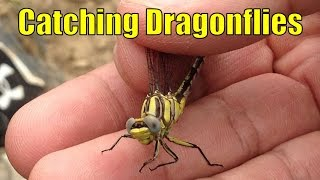 Catching Dragonflies