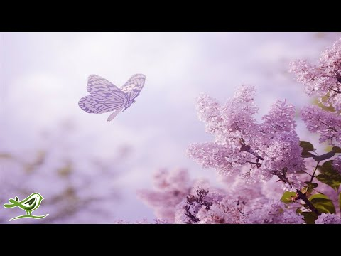 8 Hours of Relaxing Sleep Music: Soft Piano Music, Sleeping Music, Meditation Music, Fall Asleep ★89