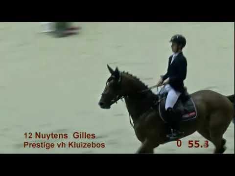 Prestige vh Kluizebos 4yo Stallions Finale