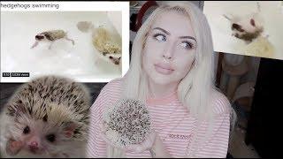 HEDGEHOGS HATE SWIMMING, STOP. (My Hedgehog Update)