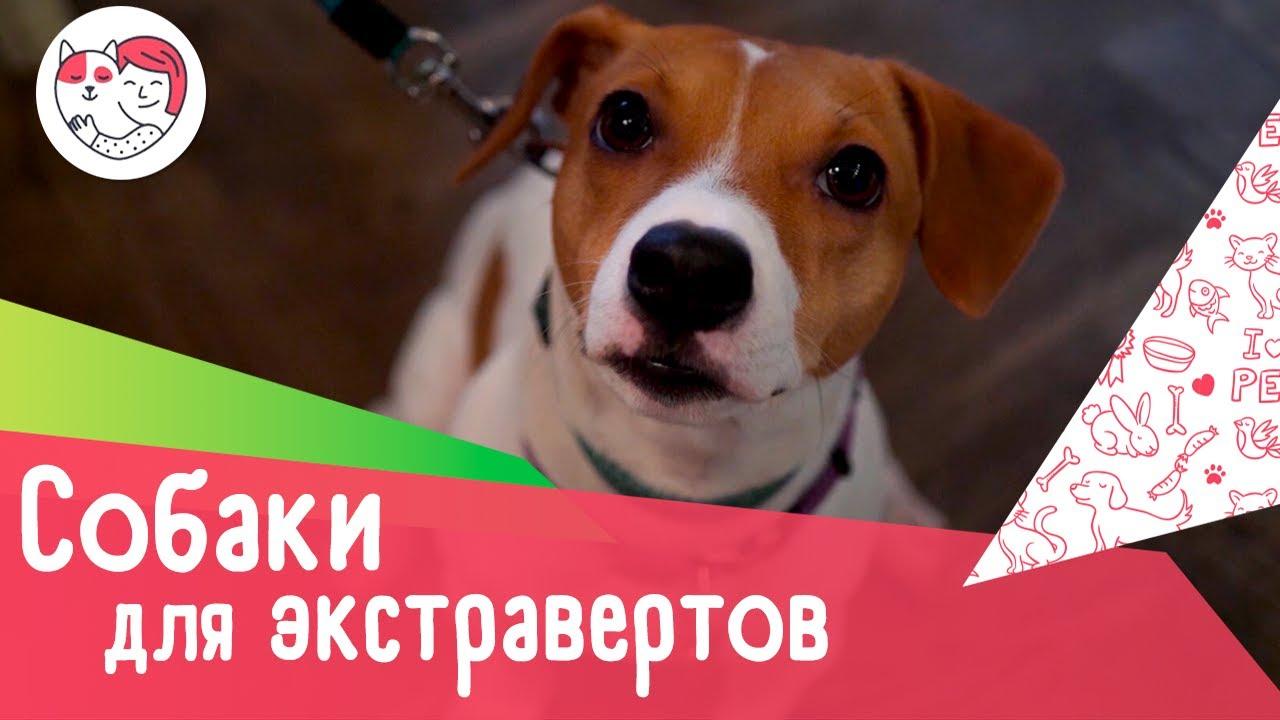5 пород собак для экстравертов