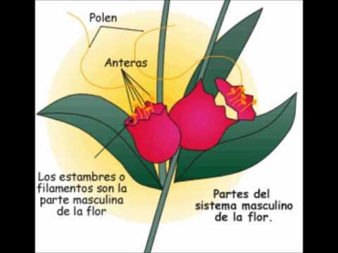 crecimiento de las plantas yahoo dating