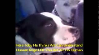 Funny Dog Crazy Mini and Tobys Adventures Dog chewed me phone