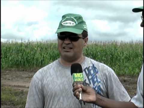 irrigação em goianesia pará