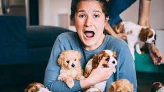 HUSBAND SURPRISES WIFE WITH 12 TINY PUPPIES...I filled our house with puppies
