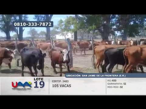 Lote Vacas en San Jaime de la Frontera (Entre Ríos)