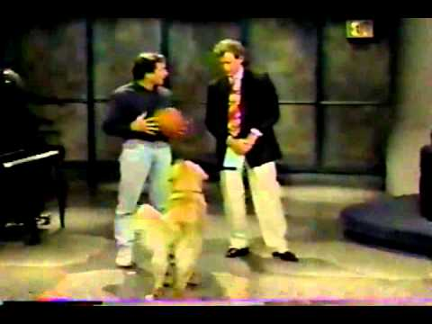 The Air Bud motion pictures are the laziest of lazy youngsters' flicks, however at the least the canine is cute · Run The Collection · The A.V. Membership