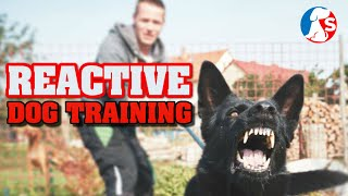 This is how you should train a reactive dog