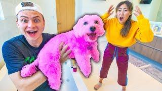 Video I DYED HER DOG PINK!! (PERMANENT) MP3, 3GP, MP4, WEBM, AVI, FLV Agustus 2019