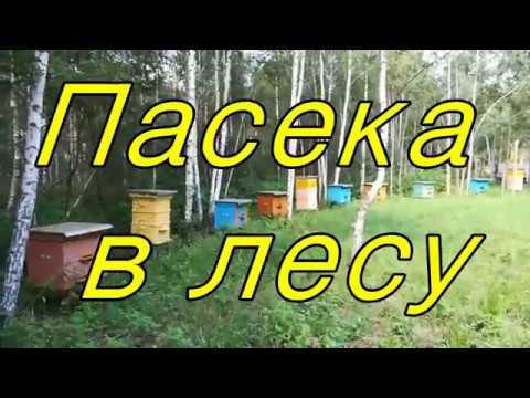 Пасека в лесу.Пчеловодство.