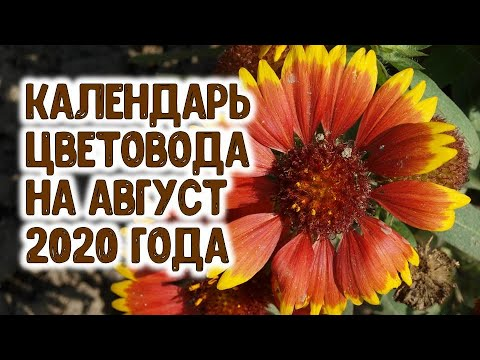 ЛУННЫЙ КАЛЕНДАРЬ ЦВЕТОВОДА НА АВГУСТ 2020 ГОДА. Агрогороскоп цветы в августе 2020