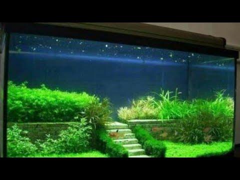 aquarium  को सजाने का अनोखा तरीका। aquarium decoration tips