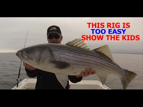 HOW TO CATCH STRIPED BASS FOR DUMMIES (NO OFFENSE) THE PERFECT RIG
