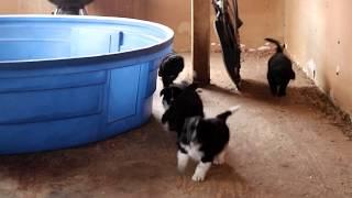 newfypoo puppies - मुफ्त ऑनलाइन वीडियो