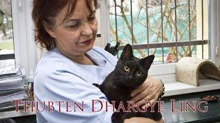 Radamenes, el gato enfermero......