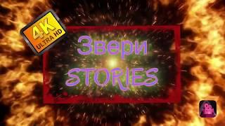 ЧТО УСТАНОВЛЕНО НА МОЁМ iPAD - ЗВЕРИ STORIES
