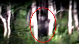 5 Believable Bigfoot Sightings Caught on Camera