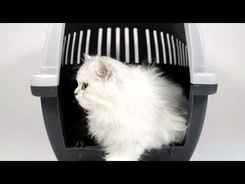 KatzenTipps - Thema: Katzen-Grundausstattung - Katzentransportbox - auf dem Weg ins neue Zuhause