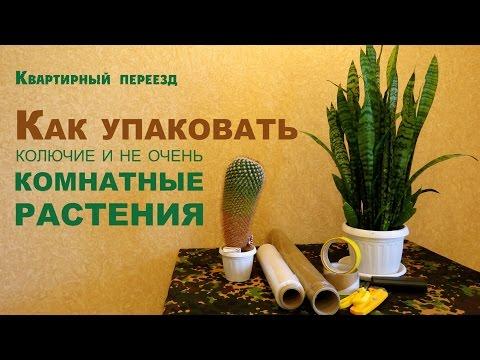 Квартирный переезд. Как упаковать декоративные комнатные растения?