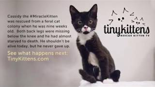 Happy Birthday, #MiracleKitten!  TinyKittens.com