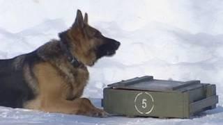 """تحميل اغاني كلاب الجيش الروسي تستخدم """"الموبايل"""" MP3"""